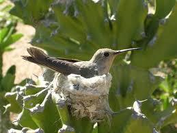 Resultado de imagen de nidos colibri