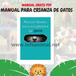 Manual Básico de adopción de gatos. pdf gratis