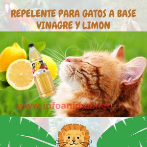 Repelente para gatos a base de  vinagre y limón
