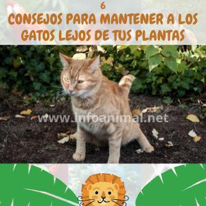 6 consejos para mantener a tus gatos lejos de tu jardín