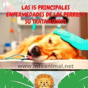 Las 15 Principales Enfermedades De Los Perros Y su tratamiento