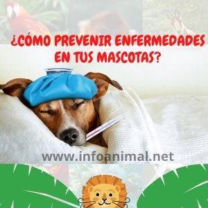 ¿Cómo prevenir enfermedades en tus mascotas?