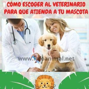 Cómo escoger al veterinario para que atienda a tu mascota